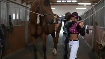 Pony breeder high thc furious hard on